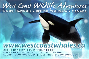 Sooke whale watching tours
